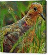 Dove Painterly Canvas Print