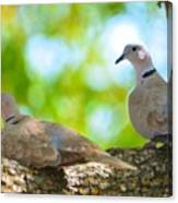 Doves In A Tree Canvas Print