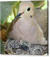 Doves In Planter Canvas Print