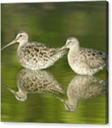 Dowitcher Reflections Canvas Print