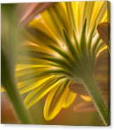 Down Among The Daisys Canvas Print