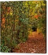 Down The Mountain Path Canvas Print
