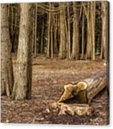 Down Tree Canvas Print