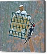 Downy Woodpecker In The Snow Canvas Print