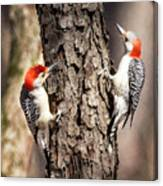 Downy Woodpeckers Canvas Print