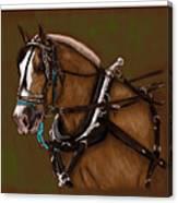 Draft Horse Canvas Print