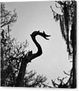 Dragon Shaped Tree Canvas Print