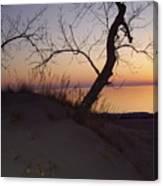 Dragon Tree At Sunset Canvas Print