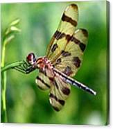 Dragonfly 10 Canvas Print