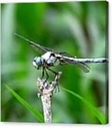 Dragonfly 15 Canvas Print