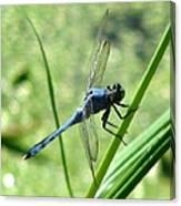 Dragonfly 4 Canvas Print