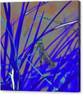 Dragonfly 7 Canvas Print