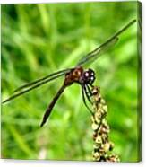 Dragonfly 7 Canvas Print