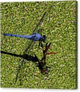 Dragonfly 73 Canvas Print
