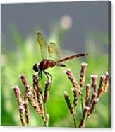 Dragonfly 8 Canvas Print