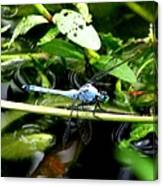 Dragonfly 9 Canvas Print