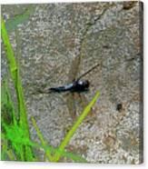 Dragonfly A Canvas Print