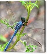 Dragonfly Delight Canvas Print