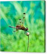 Dragonfly Hanging On Canvas Print