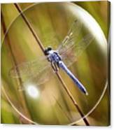 Dragonfly In A Bubble Canvas Print