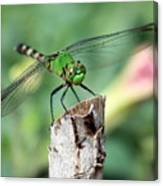 Dragonfly In The Flower Garden Canvas Print