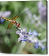 Dragonfly In The Lavender Garden Canvas Print