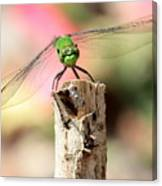 Dragonfly In The Petunias Canvas Print