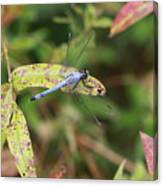 Dragonfly Leaf Canvas Print