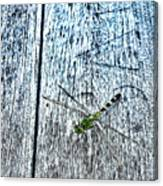 Dragonfly On A Bench Canvas Print