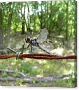 Dragonfly On Barbed Wire Canvas Print