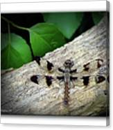 Dragonfly On Log Canvas Print