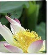 Dragonfly On Lotus Canvas Print