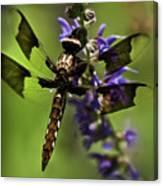 Dragonfly On Salvia Canvas Print