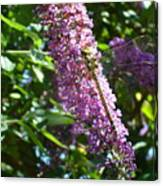 Dragonfly On The Butterfly Bush Canvas Print