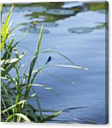 Dragonfly On The Lake Canvas Print