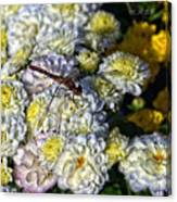 Dragonfly On White Mums Canvas Print