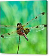 Dragonfly Rear Approach Canvas Print