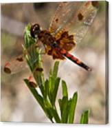 Dragonfly Resting 2 Canvas Print