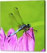 Dragonfly Resting Canvas Print