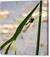 Dragonfly Resting Upside Down Canvas Print