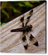 Dragonfly Spots Canvas Print