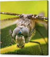 Dragonfly Wiping Its Eyes Canvas Print