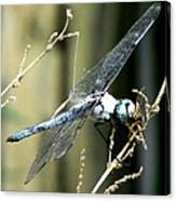 Dragonfly With Yellowjacket 1 Canvas Print