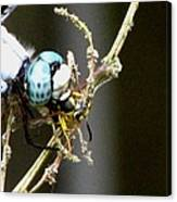 Dragonfly With Yellowjacket 2 Canvas Print