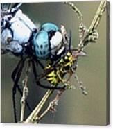 Dragonfly With Yellowjacket 4 Canvas Print