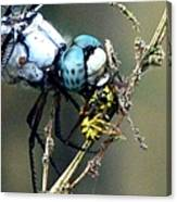 Dragonfly With Yellowjacket 5 Canvas Print