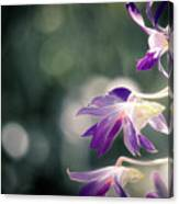 Dragons In The Orchids Canvas Print