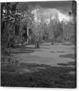 Drama In The Swamp II-black And White Canvas Print