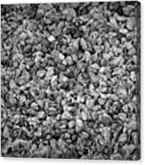 Dramatic Black And White Petals On Stones Canvas Print