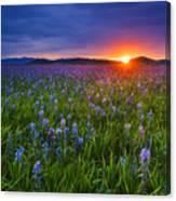 Dramatic Spring Sunrise At Camas Prairie Idaho Usa Canvas Print